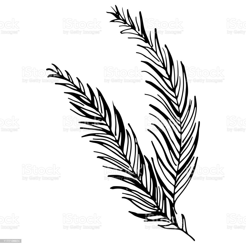 Black Tropical Leaves On White Background Silhouette Palm Leaves Vector Graphic Illustration Hand Drawn Style Illustration Tropical Plant Silhouette Stock Illustration Download Image Now Istock Any other artwork or logos are property and trademarks of their respective owners. black tropical leaves on white background silhouette palm leaves vector graphic illustration hand drawn style illustration tropical plant silhouette stock illustration download image now istock