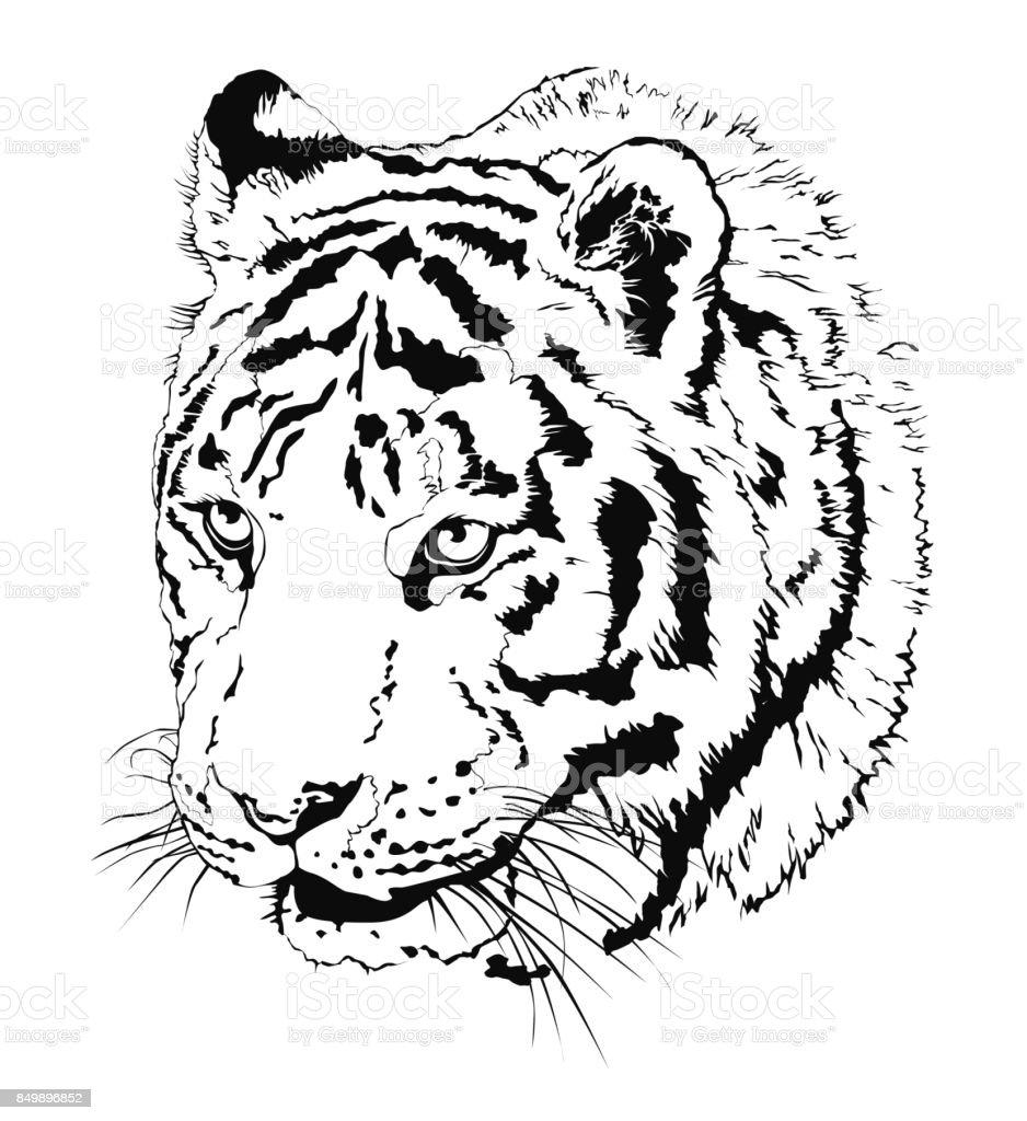 d1c7b26be00b0 Animal Head, Feline, Head, Mammal, Tattoo. Black vector realistic  illustration of tiger's head isolated on white background royalty-free ...