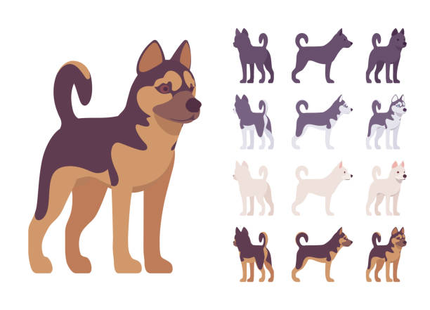 Black, White dog, Husky, Shepherd standing set Black, White dog, Husky, Shepherd standing set. Pet, family companion, home guarding, farm or police security breed. Vector flat style cartoon illustration isolated, white background, different views husky dog stock illustrations