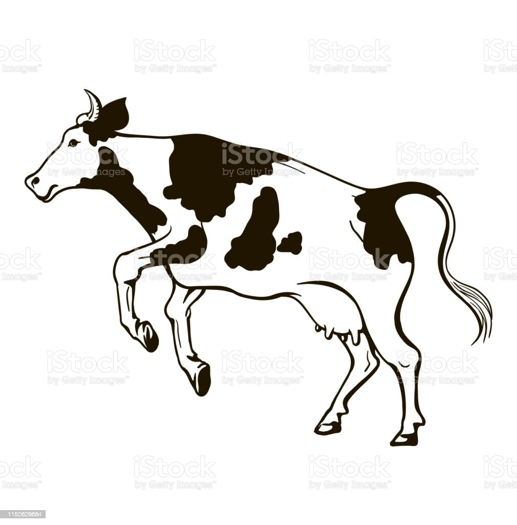 Black White Jumping Cow On White Background Stock