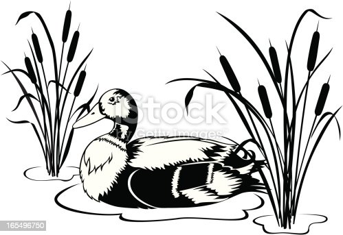 Black and white vector illustration of a Mallard duck swimming in a pond with cattails. Includes ai8,eps and .jpeg file formats.