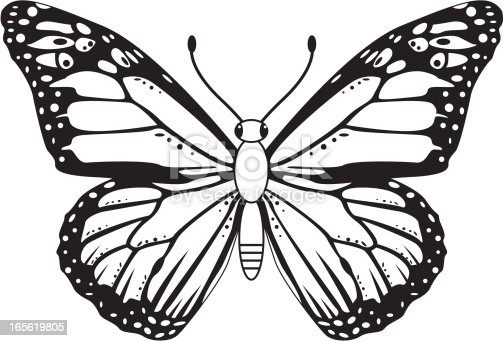 Monarch Butterfly Outline Vector Free Ai Svg And Eps