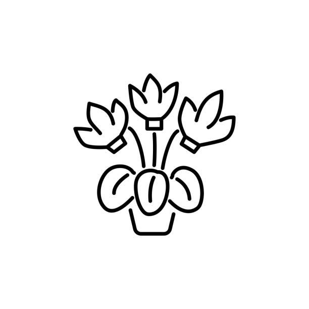 schwarzen & weiße vektor-illustration von cyclamen mit blumen & blätter im topf. liniensymbol der dekorativ blühende pflanzen im container. isoliert auf weißem hintergrund. - alpenveilchen stock-grafiken, -clipart, -cartoons und -symbole