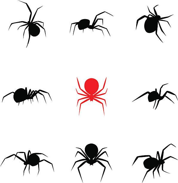 black widow spider in silhouette style - tarantula stock illustrations