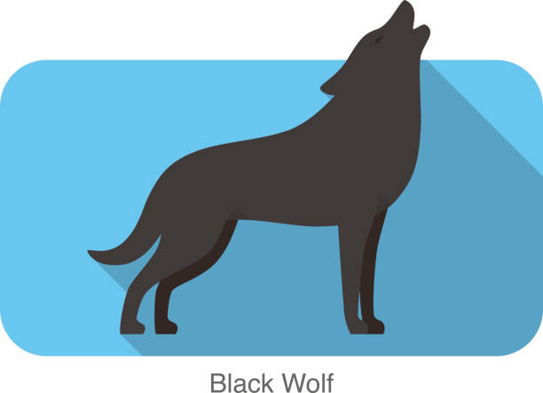 Black wolf standing and roaring Black wolf standing and roaring silhouette of a howling coyote stock illustrations
