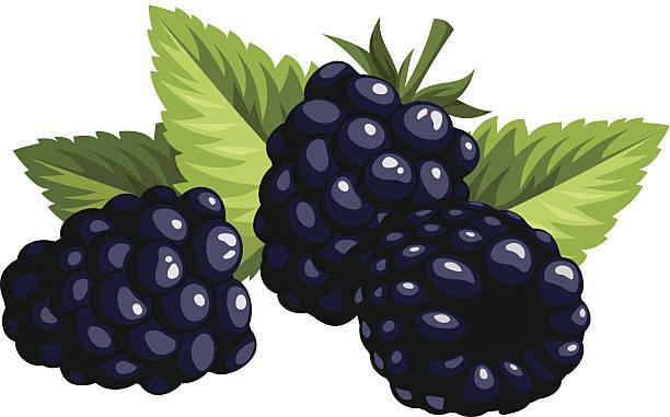 blackberry fruit clipart - photo #17