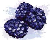 Grunge style blackberries. - vector illustration