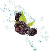 Blackberry Splash - Vector Illustration