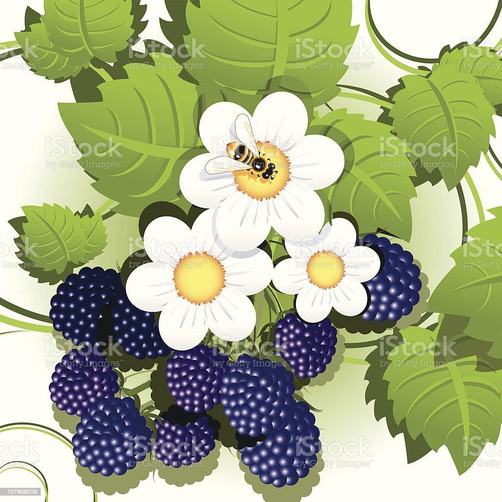 blackberry royalty-free stock vector art