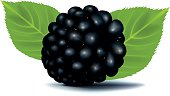 blackberry, vector file, eps8