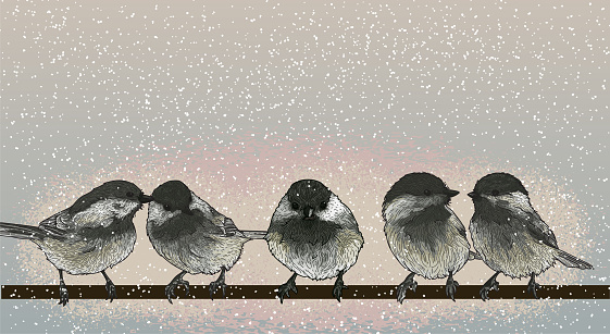 A bunch of black-capped chickadees sitting on a wire. Line artwork, individually grouped with global colours.