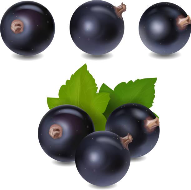 Blackcurrant berry realistic 3d vector illustration Blackcurrant berry realistic icon 3d vector illustration. black currant stock illustrations