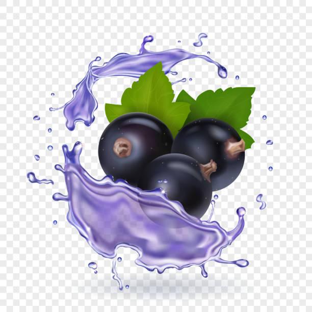 Blackcurrant juice splash. Forest berries smoothie. Vector realistic illustration Blackcurrant juice splash. Forest berries smoothie. Vector realistic illustration. black currant stock illustrations