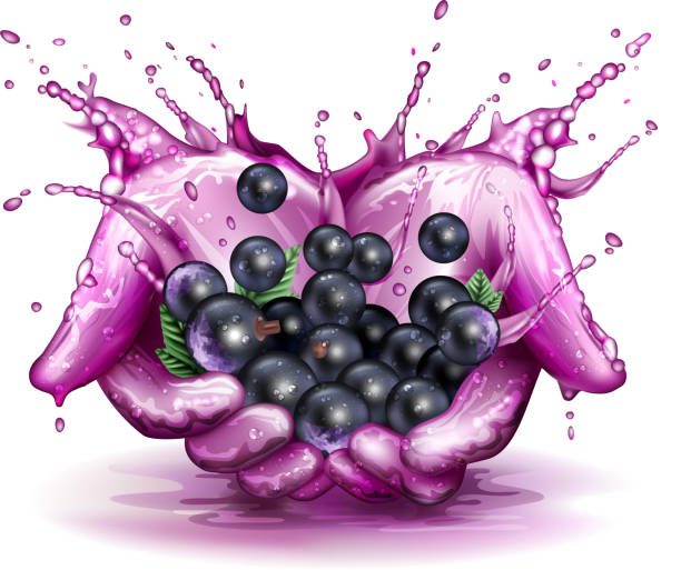 Blackcurrant splashing concept blackcurrant in splash of juice. 10 EPS file with transparency effects and overlapping colors. black currant stock illustrations