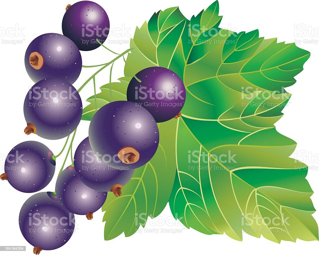 Black-currant royalty-free stock vector art