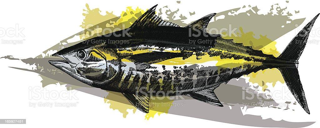 Blackfin Tuna vector art illustration