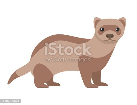 Black-footed ferret. Isolated vector illustration