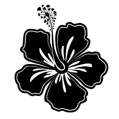 Black-white hibiscus flower. Exotic flower. Vector illustration