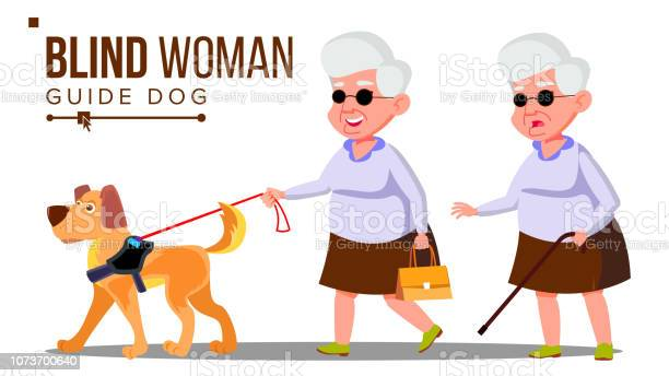 Blind old woman with dark glasses cane in hand and guide dog vector vector id1073700640?b=1&k=6&m=1073700640&s=612x612&h=dtrmkvxwpc qrutn6oqc s0lkl53iu8ew2wcokior1s=