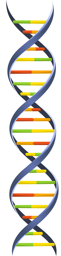 DNA Blood Chromosome Chain Helix Model Science Molecular Spiral structure
