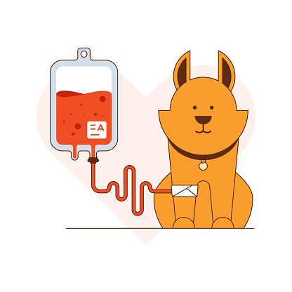Blood donation for dogs vector illustration
