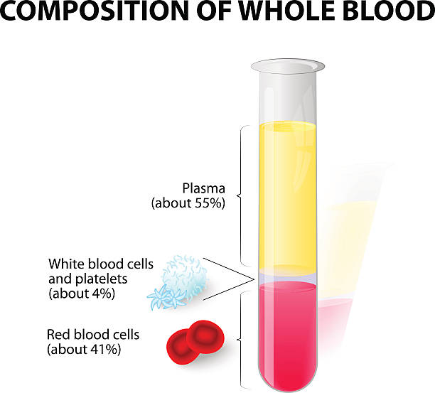 blood plasma and formed elements in Test tube Composition of whole blood. blood plasma and formed elements in test tube. Hematocrit. Red blood cells (erythrocytes), white cells (lymphocyte) and platelets (thrombocytes) hemoglobin stock illustrations