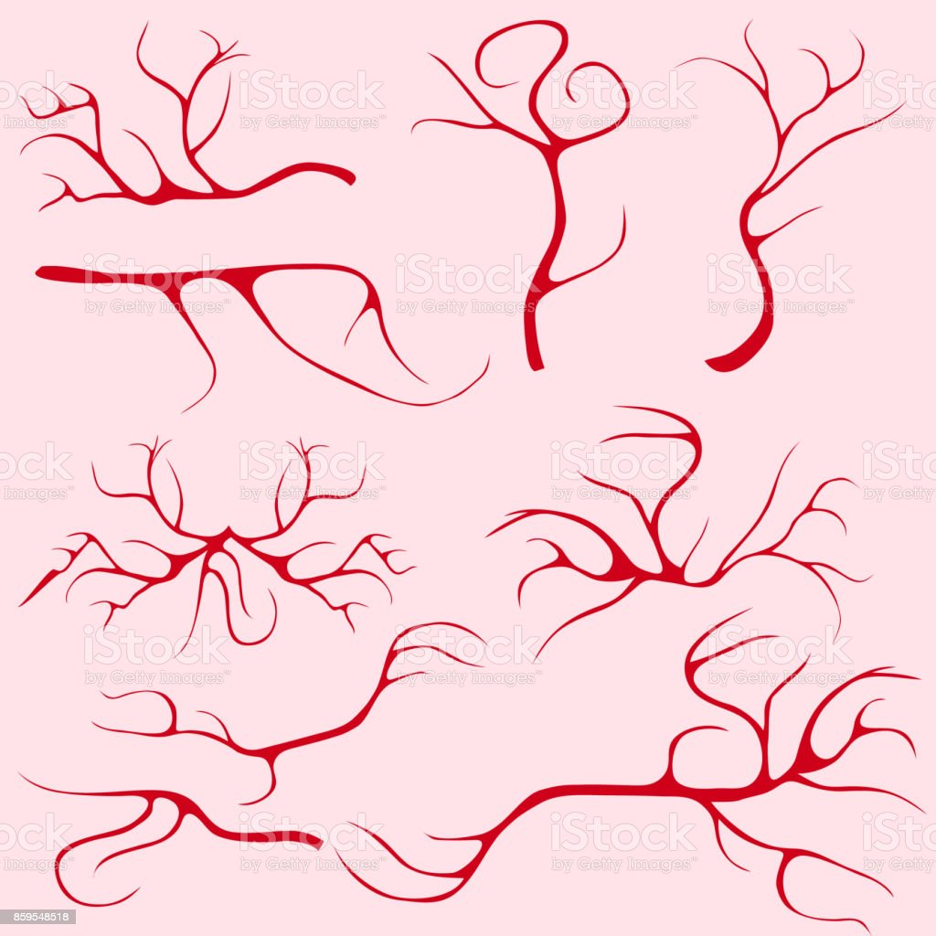 Blood Vessels And Capillaries Stock Vector Art More Images Of