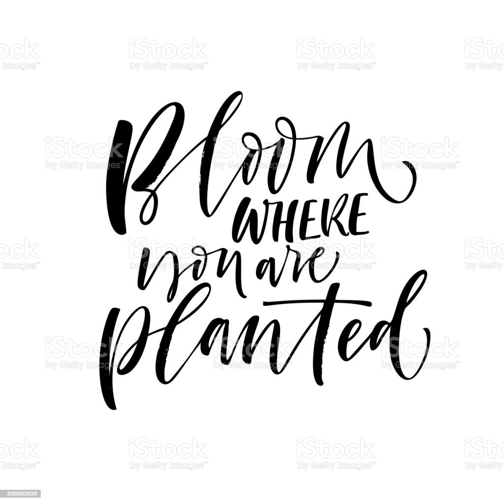 Bloom where you are planted card. vector art illustration