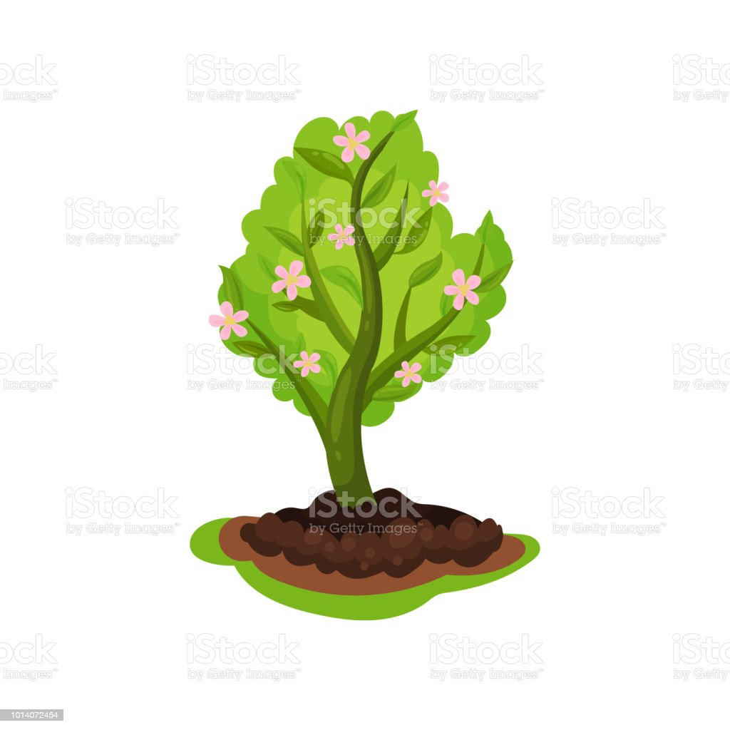 Blooming Apple Tree With Bright Green Leaves And Small Pink Flowers