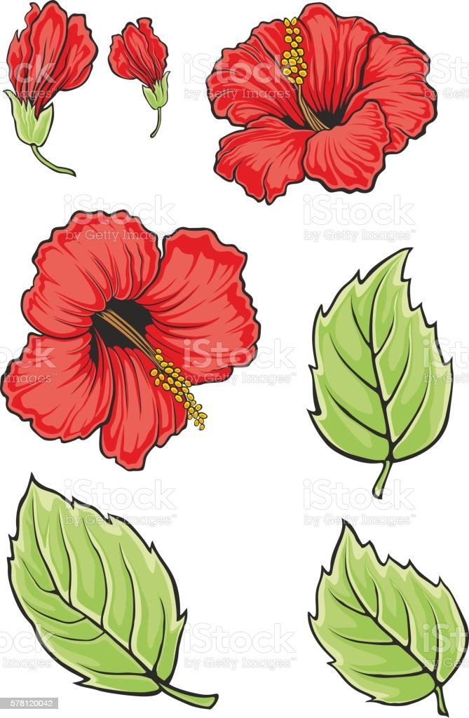Blooming Beautiful Hibiscus Flower Hawaii Symbol Vector Illustration