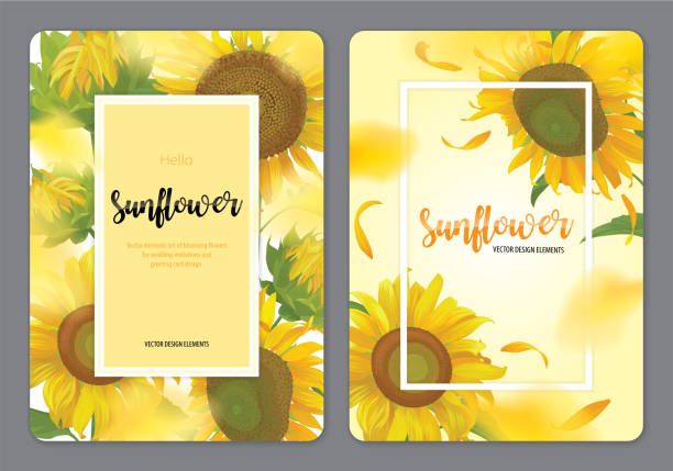 blooming beautiful sunflowers background template. - sunflower stock illustrations