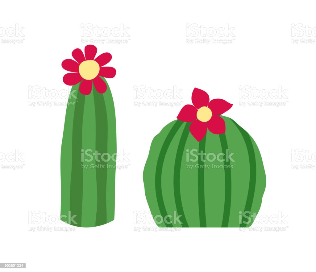 Blooming cactus set. Isolated on white background. Vector illustration. - Royalty-free Art stock vector