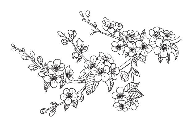 Blooming cherry branch, vector illustration. Sakura isolated line sketch on white background. Blooming cherry branch, vector illustration. Sakura flowers, isolated line sketch on white background. flowers tattoos stock illustrations