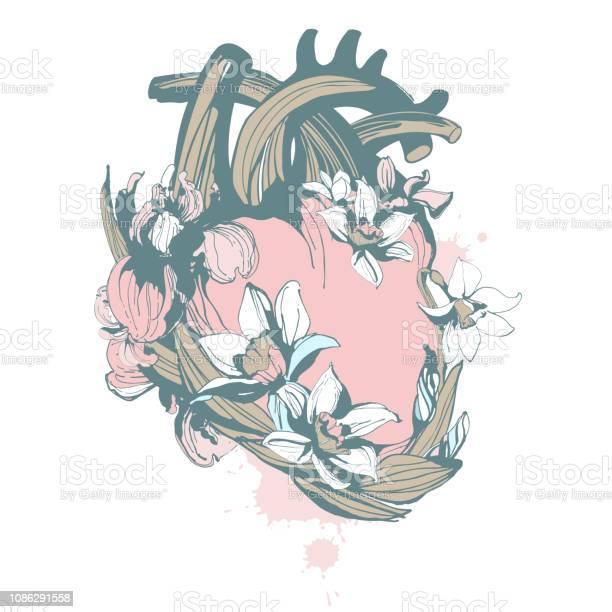 Blooming loving human anatomical heart hand drawn floral pattern vector id1086291558?b=1&k=6&m=1086291558&s=612x612&h=tu4vgy5ypb6qm0yhoxwt6swsv4dx7o5qougp 3kz0da=