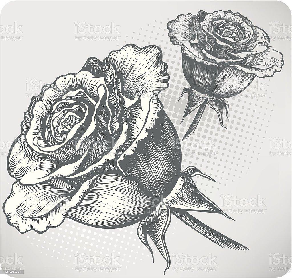 Eclosion Dune Fleur Rose Vintage Dessin A La Main Illustration