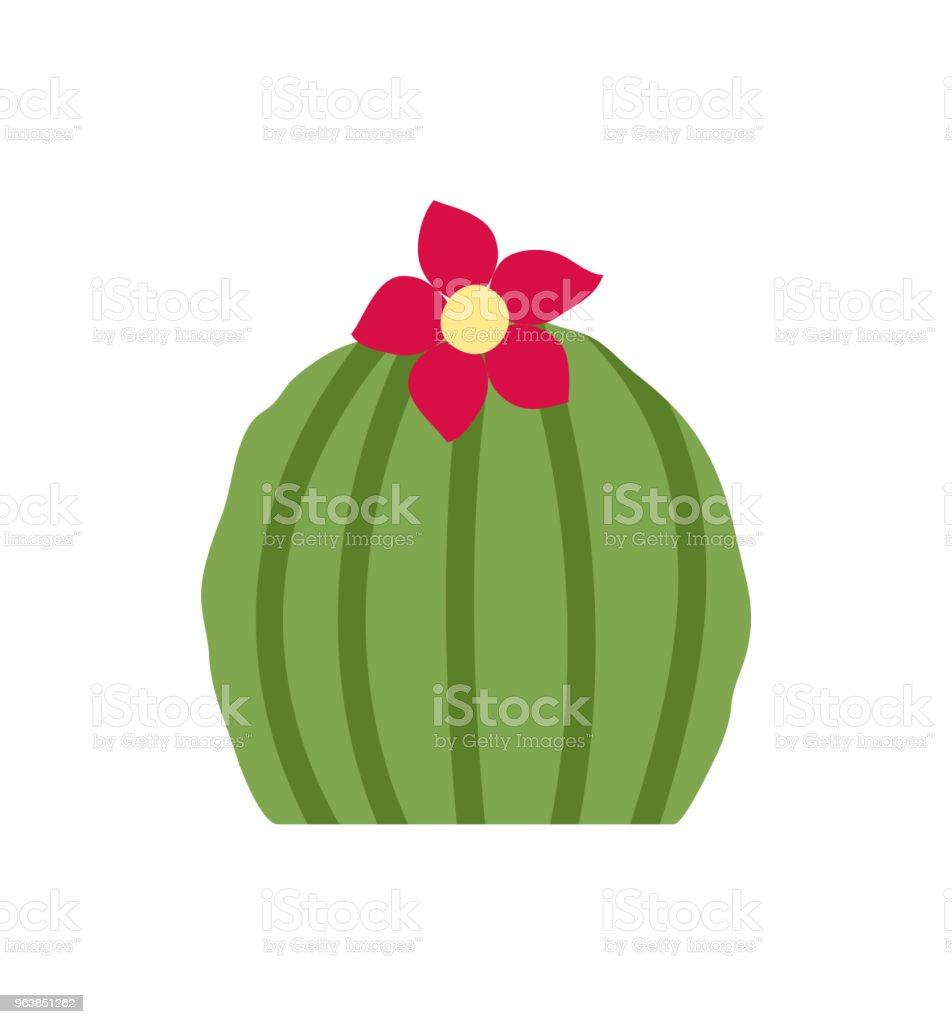 Blooming round cactus. Isolated on white background. Vector illustration. - Royalty-free Cactus stock vector