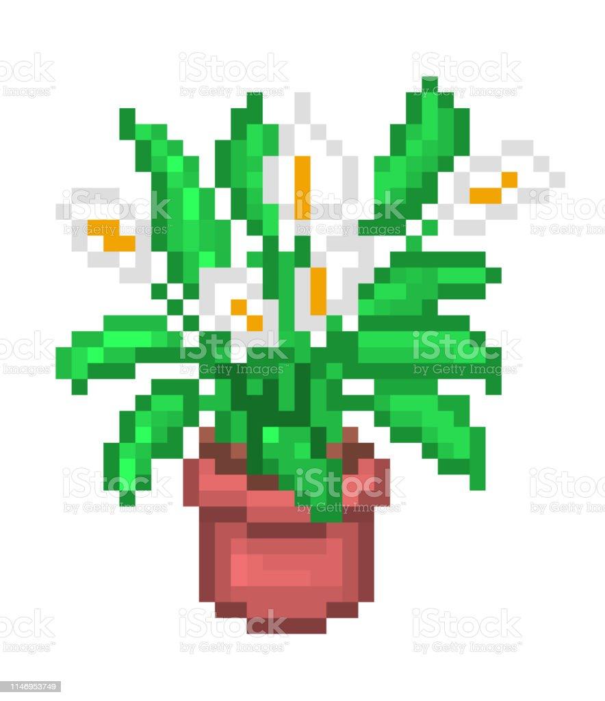 Floraison Spathiphyllumpeace Lilyspath Illustration Pixel