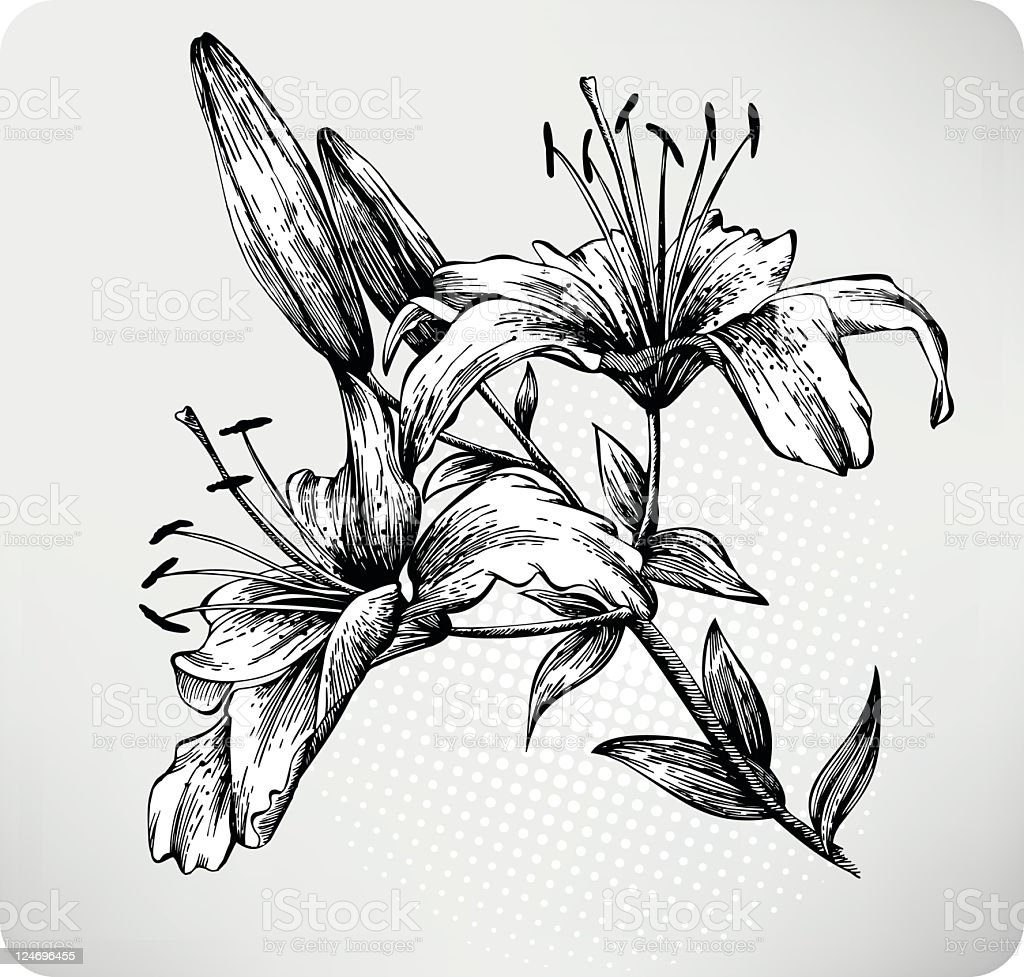 Blooming Tiger Lily Hand drawn vector art illustration