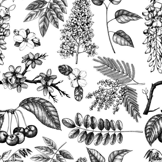 blühende bäume-pattern_2 - robinie stock-grafiken, -clipart, -cartoons und -symbole