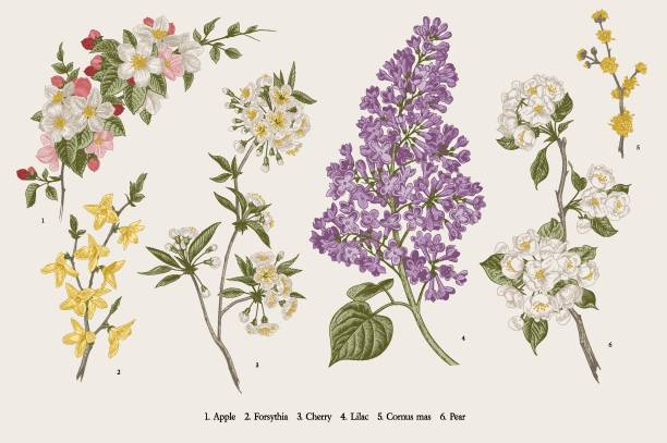 blooming trees. - botanika stock illustrations