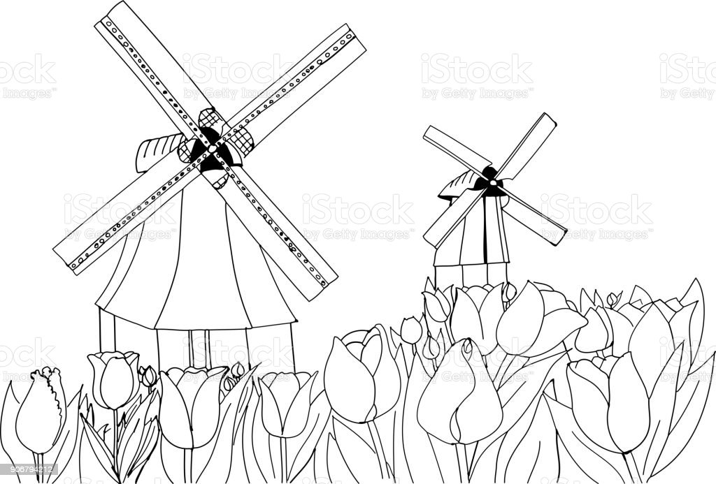 Blooming tulips on the background of windmills. Holland landscape. vector art illustration