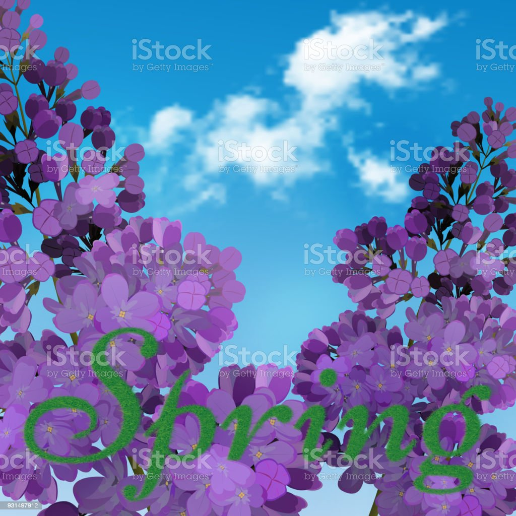 Blooming Violet Lilac Flowers Floral Background With Bluesky And ...