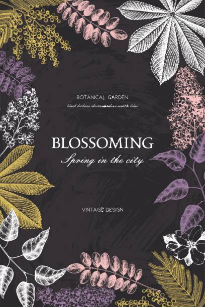 blooming_trees_card_7 - robinie stock-grafiken, -clipart, -cartoons und -symbole