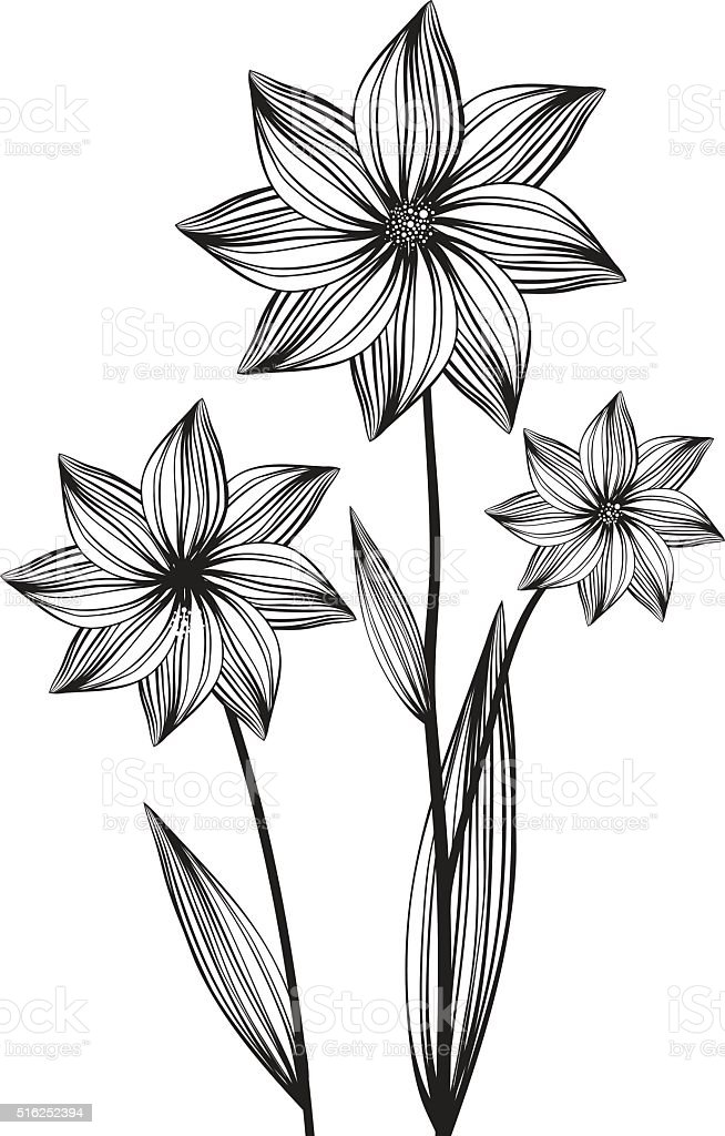 Blossom flower line drawing royalty free blossom flower line drawing stock vector art