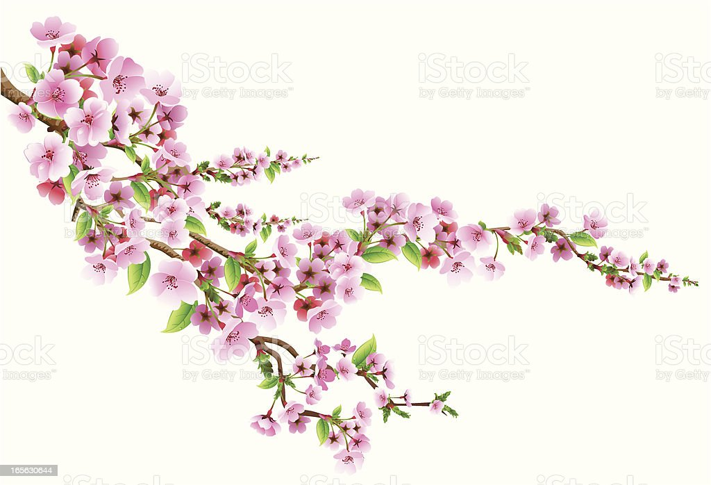 Blossom - Royalty-free Achtergrond - Thema vectorkunst