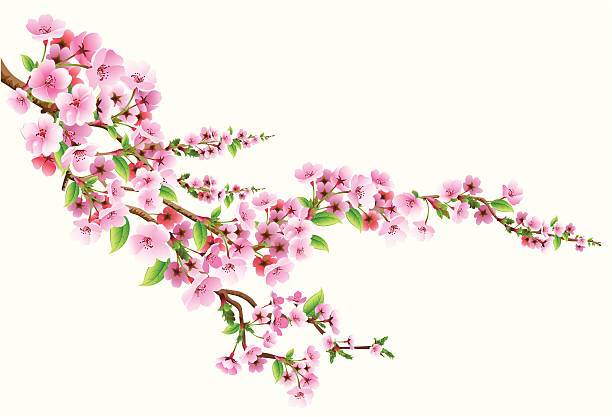 Blossom Vector illustration of blossoms branch apple blossom stock illustrations