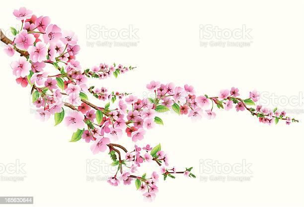Blossom Stockvectorkunst en meer beelden van Achtergrond - Thema