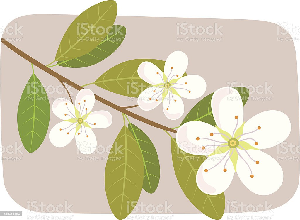 Blossom royalty-free blossom stock vector art & more images of apple tree