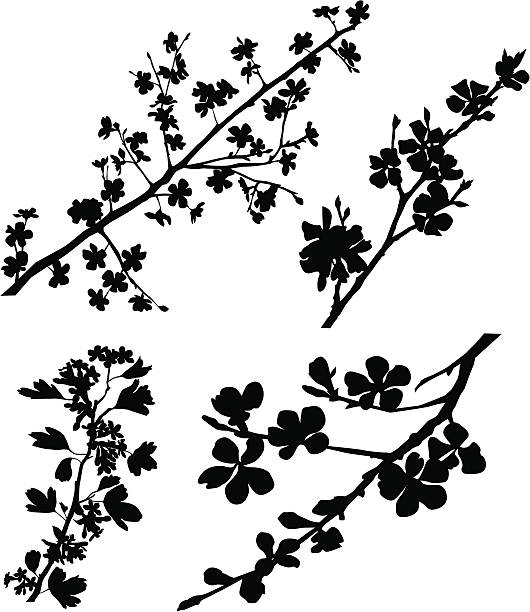 Blossomed Branches Variable silhouettes of spring blossomed branches.  apple blossom stock illustrations