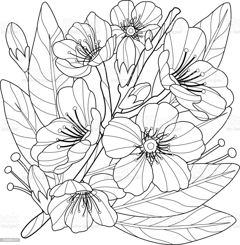 Blossoming Almond Tree Branch With Flowers Coloring Book Page Royalty Free